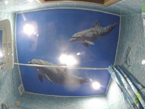 """Фотопечать """"Дельфины"""". Глянцевое полотно."""
