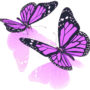 бабочки 018