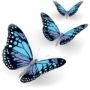 бабочки 019