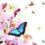 бабочки 022