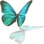бабочки 033