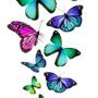 бабочки 034