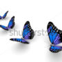 бабочки 036