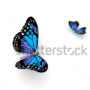 бабочки 038