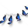 бабочки 039