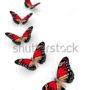бабочки 040