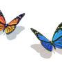 бабочки 054