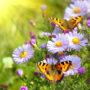 бабочки 055