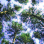 лес в небо 001