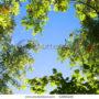 лес в небо 006