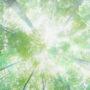 лес в небо 008
