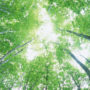 лес в небо 009