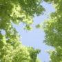 лес в небо 010