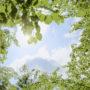 лес в небо 011