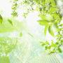 лес в небо 021
