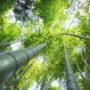 лес в небо 023
