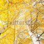 лес в небо 024