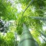 лес в небо 026