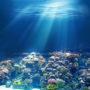 рыбки 027
