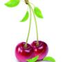 фрукты 005