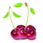 фрукты 006