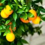 фрукты 018