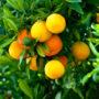 фрукты 019