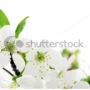 цветочный фон 003