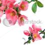 цветочный фон 006