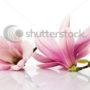 цветочный фон 008