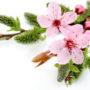 цветочный фон 012