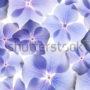 цветочный фон 021