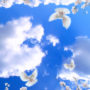 облака 163